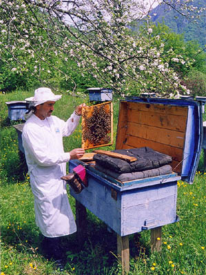sch-bee-keepers.jpg - 299x400 - 57,673 bytes - Click to close